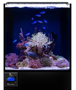 Reef Aquarium Lighting Guide